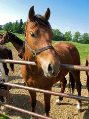 Coaching met paarden