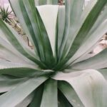 De mysteries van de palmboom